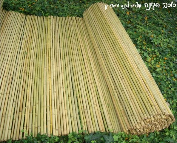 גדר במבוק מושחל| גובה 2*5