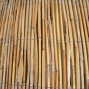 גדר במבוק קנים| גובה 2*5