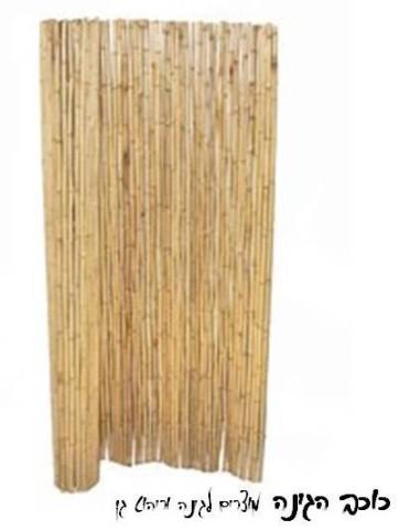גדר במבוק קנה צהוב| גובה 2*5